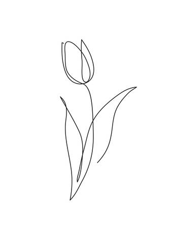Tulip flower line art. Minimalist contour drawing. One line artwork Фото со стока - 95316113