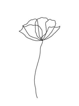 Poppy bloem lijntekeningen. Minimalistische contourtekening. Eén lijns kunstwerk