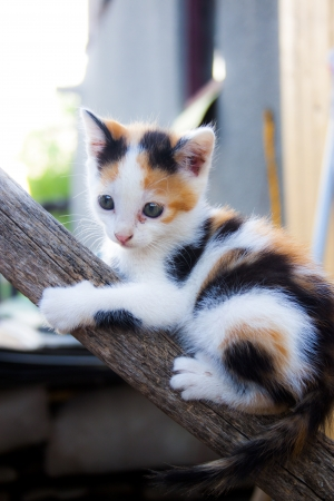 Little cat climbing on a tree photo