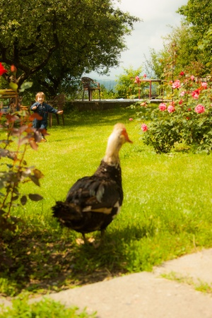 Beautiful little girl running to a duck photo