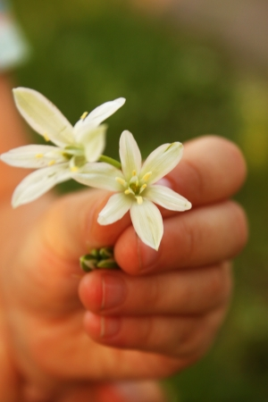 Small baby hand offering a white flower photo