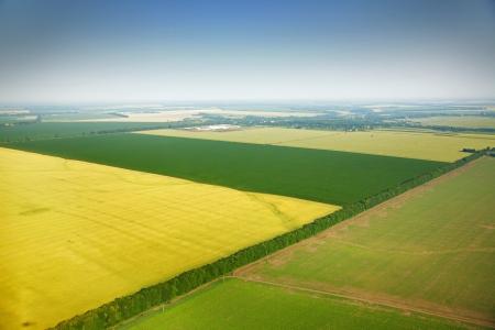colza: Vista a�rea de los campos de colza, cerca de la aldea