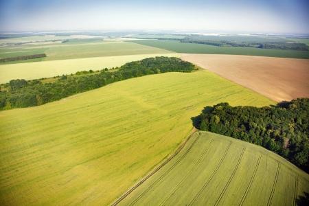 aerial: Veduta aerea di campi di colza nei pressi del villaggio