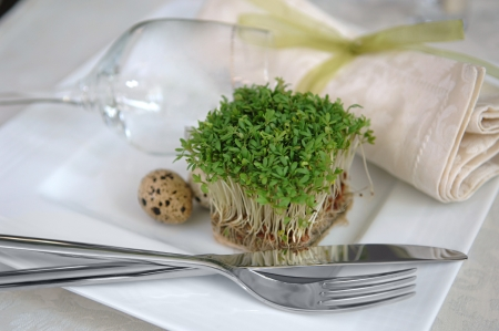 vegetarian breakfast  sprouts and quail eggs photo