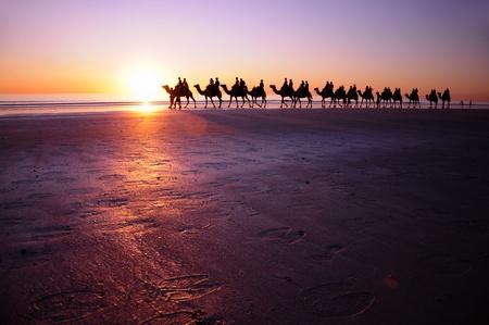 camello: Playa de camellos