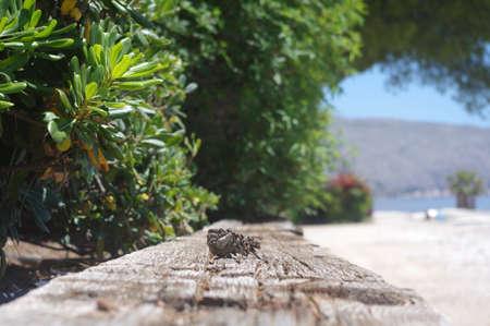Pine cone at the beach. Close up. Sunny 免版税图像