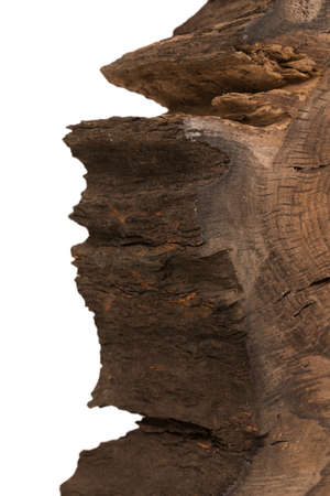 Cross section of tree stump isolated on white background Foto de archivo