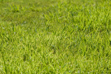 Botany green nature grass background garden field