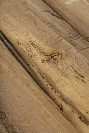 Veneer made from old oak, texture of wood Foto de archivo