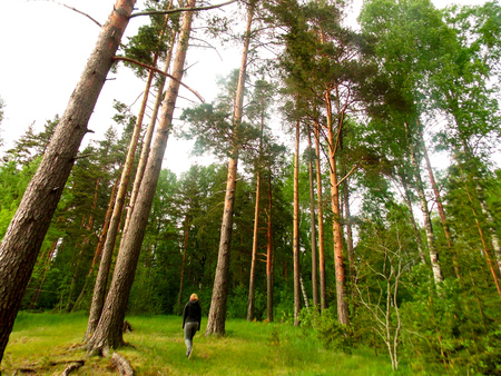 The greatness of the Russian forests