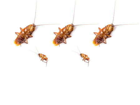 filth: group of cockroach on white background Stock Photo