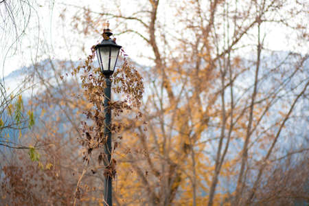 A single lamp post in a forest, covered in leaves and vines. Фото со стока