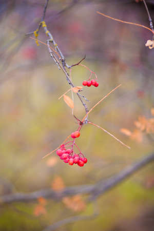 A branch and red berries in a forest