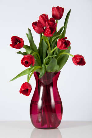 Drooping red tulips in a glass, vase set against a white background  photo