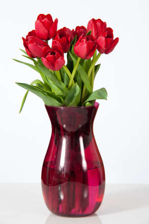 Red tulips in a glass vase set against a white background  Фото со стока