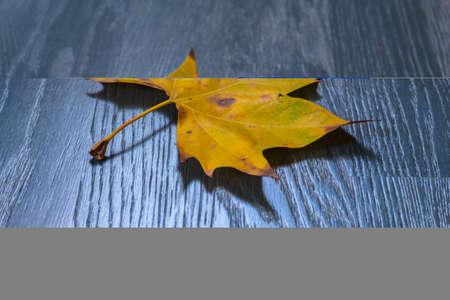 varnished: Leaves on grey varnished parquet Stock Photo