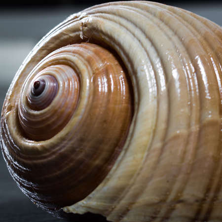 closeup of marine snail shell with featured details