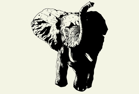 Hand drawn wild elephant charging forward