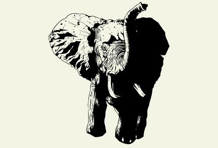 Hand drawn wild elephant charging forward