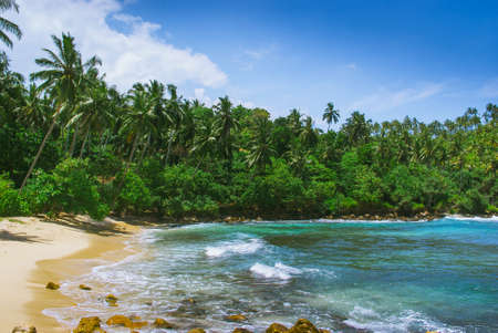 dominican: View of nice tropical beach with palms. Sri Lanka, Mirissa Stock Photo