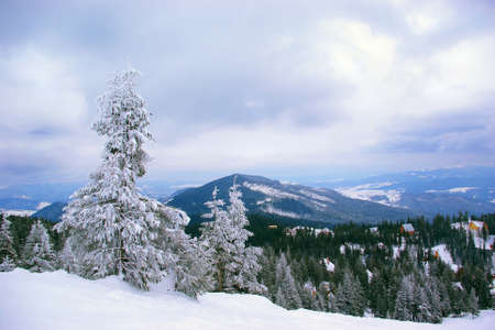 Winter mountain landscape. Dragobrat, Ukraine.