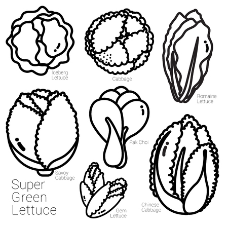 Many kinds of lettuce are illustrated in black outline.