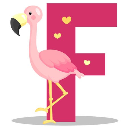 Alphabet F for flamingo