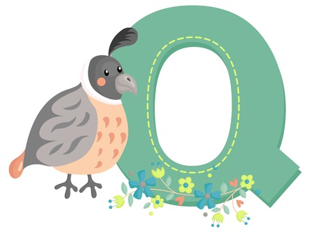 Alphabet Q for Quail