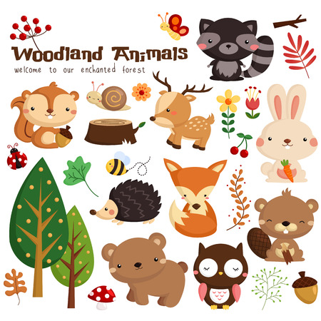cute bear: Woodland Vector Set Illustration