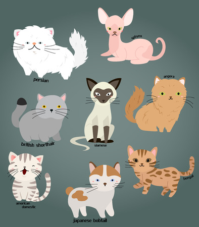 gato caricatura: Cat Vector Set
