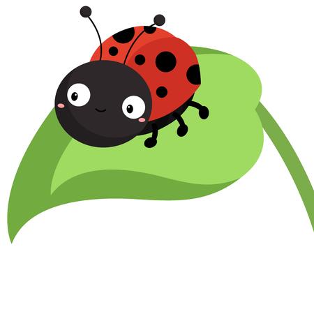 ladybug on leaf: Ladybug