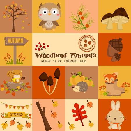 Square Woodland Autumn Animal Vector Set Illustration