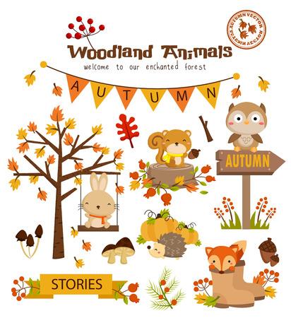 sowa: Woodland Animal Vector Zestaw jesień Ilustracja