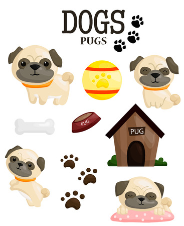 pug puppy: Pug Puppy Vector Set