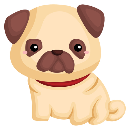 a dog with a pug pure breed