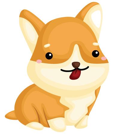 a really happy pure breed corgi dog