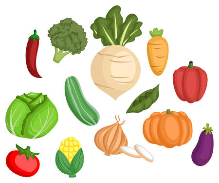 many types of vegetables in one set Illustration