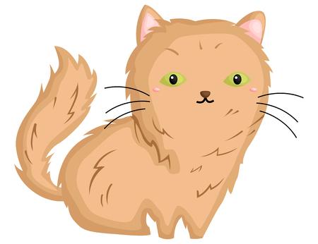 a cute angora cat