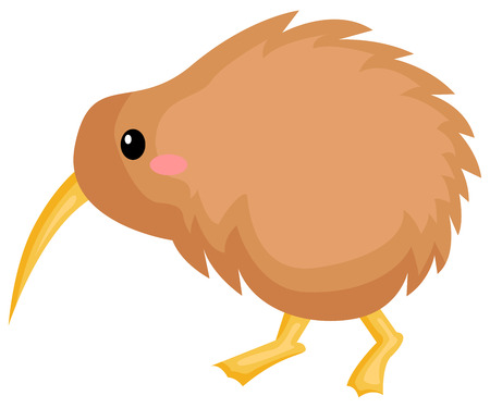 a vector of a cute kiwi bird Illustration