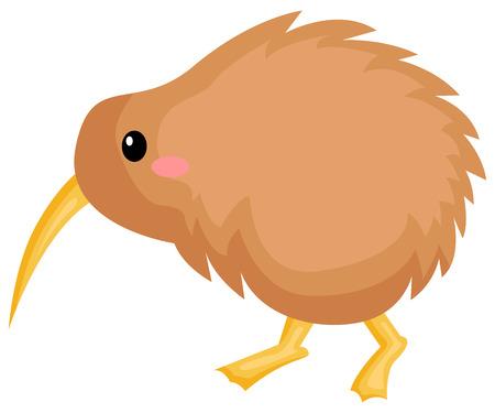 a vector of a cute kiwi bird Illustration