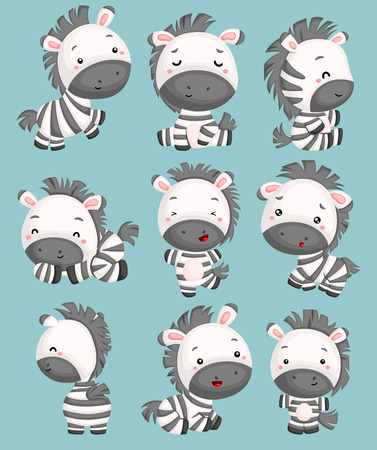 a vector of cute zebras in many poses