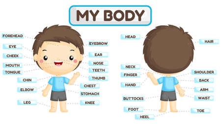 A Vector Set of Boy Body Parts with Detailed Names of the Parts