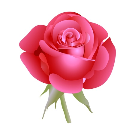 rosebud: Red beautiful rose. Vector illustration.
