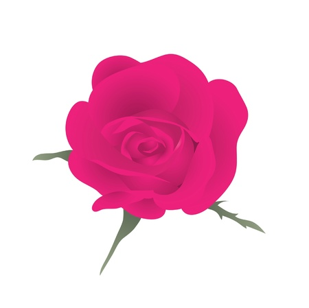 Red beautiful rose. Vector illustration.