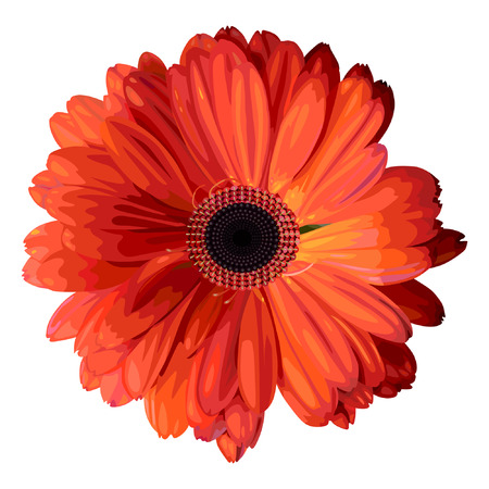 Vector illustration  Isolated flower on white background  Illustration