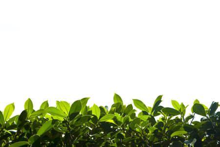 Green nature foliage border down   field Stock Photo - 13139346