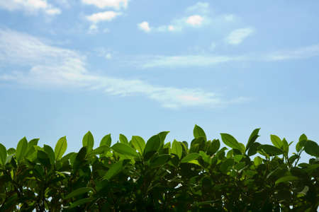 Green nature foliage border with blue sky Stock Photo - 13139352