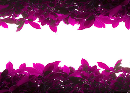 Pink foliage border up and down field Stock Photo - 13139350