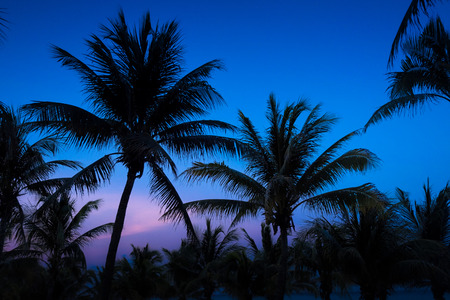 Silhouetted Palms at Dusk 免版税图像