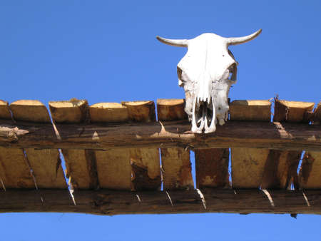 Cow skull on a wooden gate against clear blue sky.